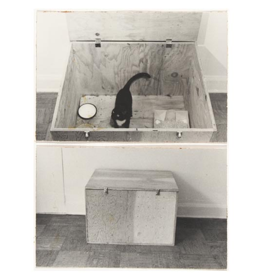 Two photographs are placed one below the other. The top photo shows a black cat sitting in a wooden box with a hinged lid, with a bowl-like object to the left. The bottom image shows what appears to be the same box with the lid closed.