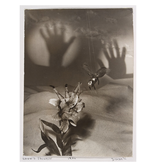 Black & white photo of flower with two pairs of women legs sticking, a fly hanging over the wrinkled cloth and a shadow of two hands in circle in the background.