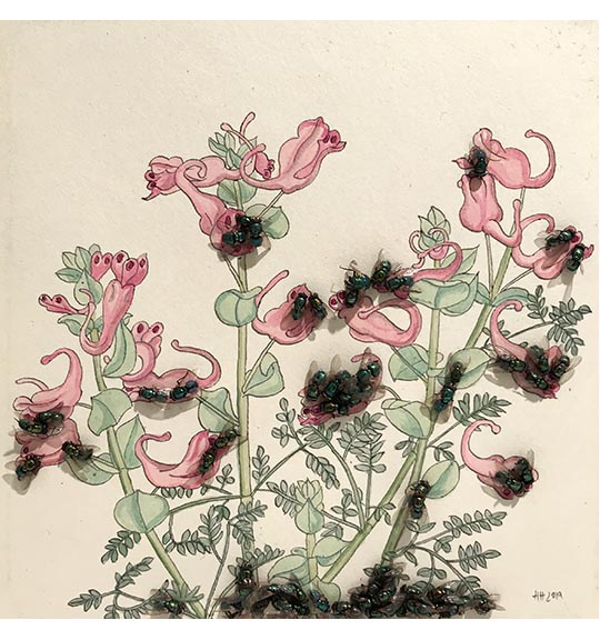 Image of colored plant drawing featuring pink flowers and green leaves and steams. Flies are placed on the drawing, mostly in clusters.