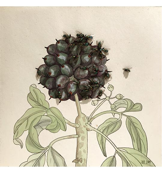 Image of colored plant drawing featuring round blue flowers and green leaves and steams. Flies are placed on the drawing, mostly in a cluster on the right side.