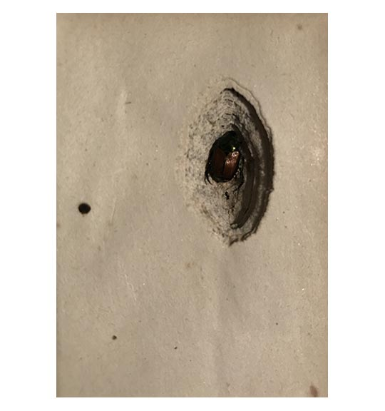 An image of a book page with bug coming out from hole created in the pages.