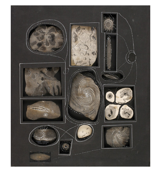 A collage consisting of textured pieces and various cut outs. The cut outs appear to be of fossil or natural materials. The black board is cut out to create a depression, where the cut out images are placed. Thin white lines and dotted lines circle and swirl around the cut outs. The cut outs are placed into rectangular or circular depressions in the black board, and white lines frame each of them. Dotted lines and circles form connections between the cut outs.