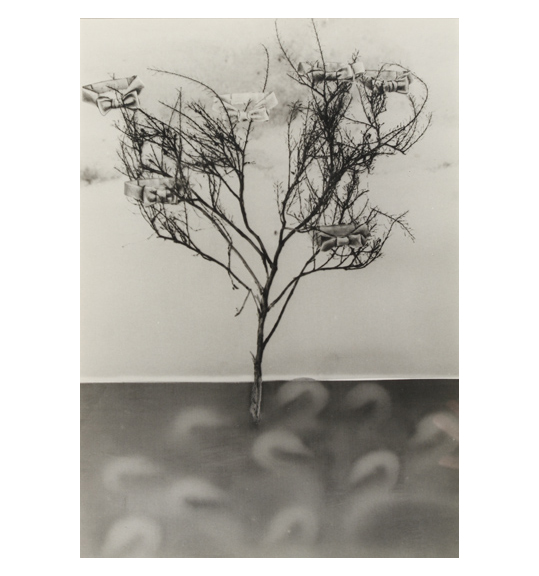 An image of a tree with no leaves and a thin trunk. Bow ties are placed among the branches of the tree. The sky and ground are both in shades of grey.