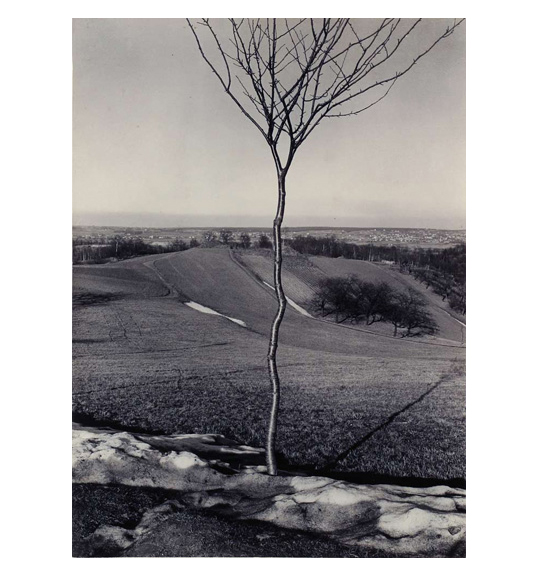 A black and white landscape with rolling hills. Buildings are seen in the far distance. A leafless tree with a thin trunk stands in the center of the work.