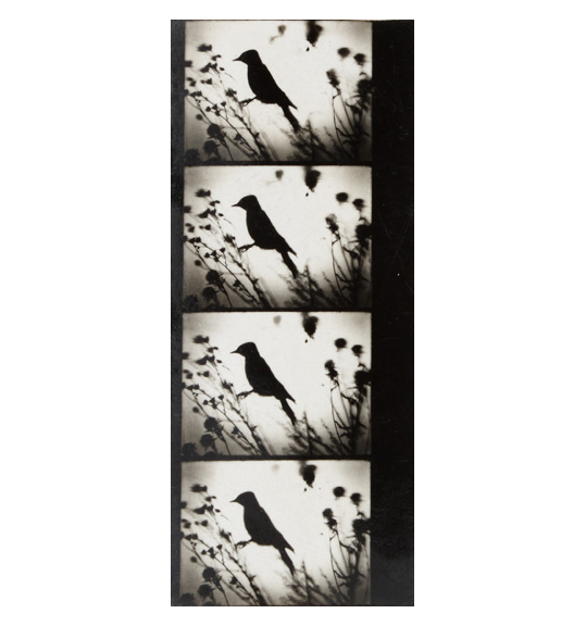 Black and white image of four identical frames arranged vertically. Image features a black bird silhouette on a white background among grass and flowers.