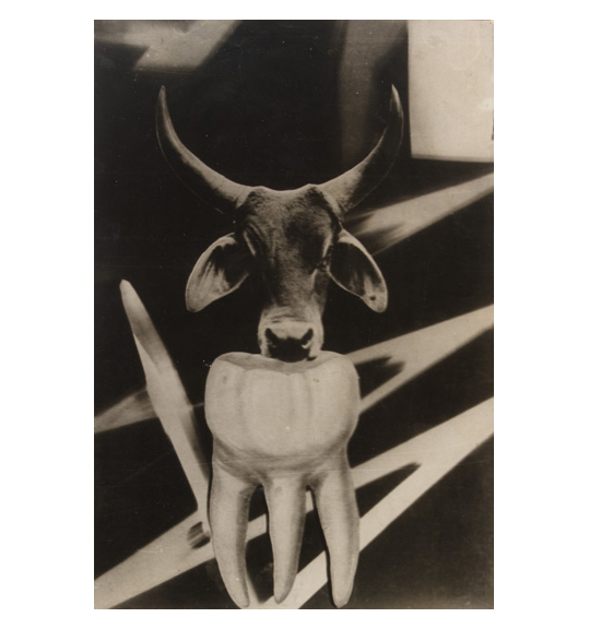 An image of a bull's horned head in the center of the work, facing the viewer. The bull appears as if resting its muzzle on the image of a large tooth.