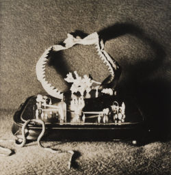 A photograph of a jaw bone, perhaps of a shark or other animal, placed sideways on a tray. Multiple other small objects are placed on the tray.